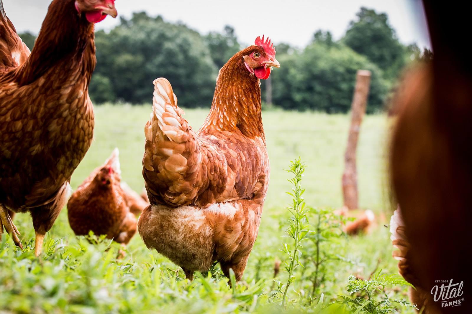 Vital Farms girls