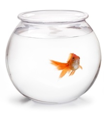 Fishbowl-4